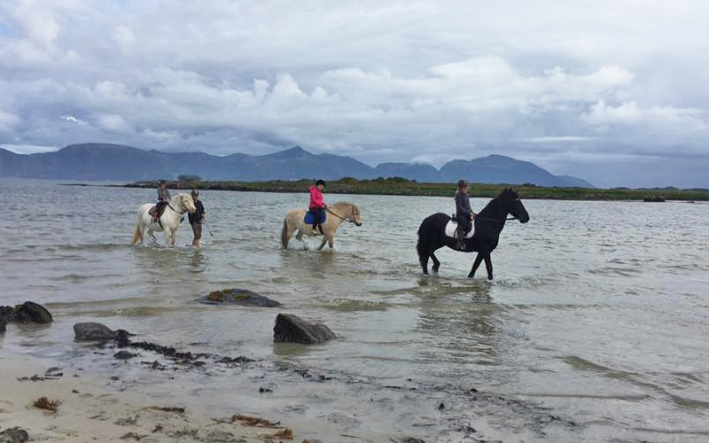 Satser på hester
