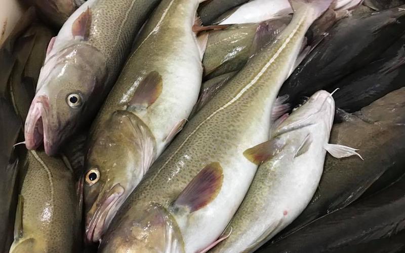 En fisker gir 3 jobber