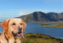 Sporhunder vil søke