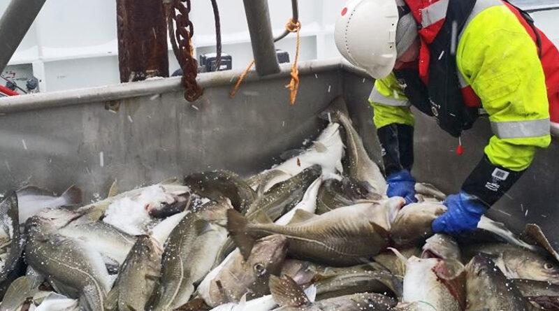 Millioner av fisk