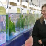 Forsker på sjøalger